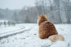 "Результат пошуку зображень за запитом ""сніг на дорогах"""