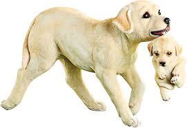 Collections Etc Golden Labrador Dog ...
