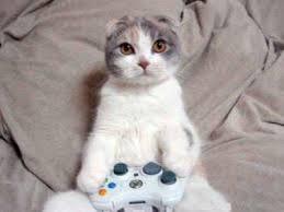 ゲーム猫正面