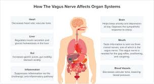 Reflexology Chart Vagus Nerve How To Stimulate The Vagus Nerve Boosting Mind Body Health