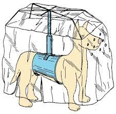 Bildresultat för paraply hund