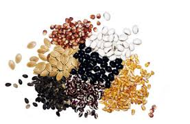 garden seeds. Wonderful Seeds Mixed Dried Seeds In Garden Seeds U