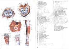 human anatomy lab resources anatomical models