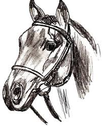 horse head drawing. Brilliant Head How To Draw A Horse Head Step By Intended Drawing