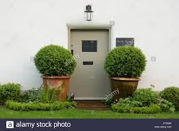 the front door flanked by two ornamental potted trees of bank house one of the whitewashed thatched cotes of milton abbas dorset england uk