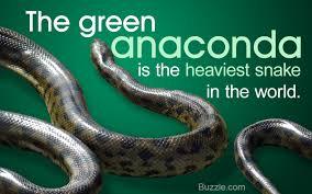 Image result for anaconda snake