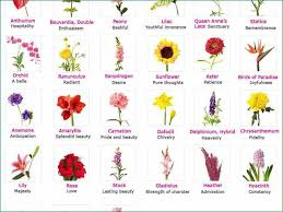 unique flowers and their meanings with diffe types of flowers and their meanings with pictures cool