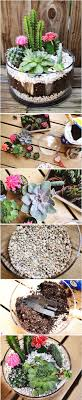 Small Picture Best 25 Outdoor cactus garden ideas on Pinterest Cactus garden
