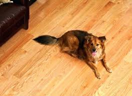 best flooring for pets. Best Laminate Flooring For Dogs And Pets Floor Cleaner Pet Friendly C