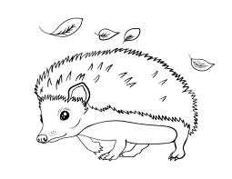 Small Picture Elegant Hedgehog Coloring Pages 17 For Coloring for Kids with