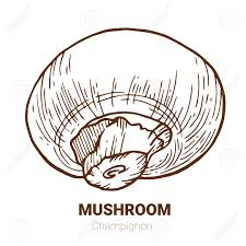 chignon hand drawn vector ilration sketch mushroom drawing isolated on white background organic vegetarian