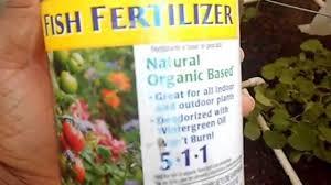 Alaska Fish Fertilizer Feeding Chart Leaf Burn From Fish Fertilizer