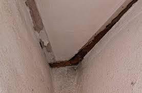 termite signs