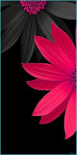 Pink And Black 8D Flowers Wallpaper ...
