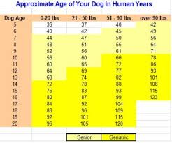 Dog To Human Years Conversion Chart Dog Age How Old Is Your Dog In Human Years