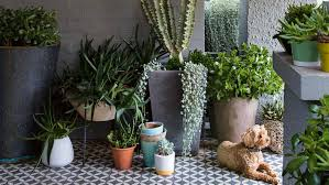 Pot Plants Porch Dog Peter Fudge Garden Apr Best Urban Designs Q Dxy Urg C