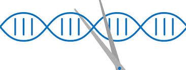 Genome Editing Genome Editing Pflanzen Forschung Ethik De