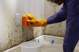 how to remove mold from walls in