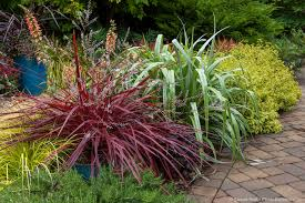 Design A Line Cordyline Colorful Foliage Photobotanic