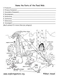 student activity sheet food web - Yahoo! Search Results | teaching ...
