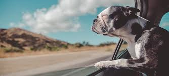dog smell out of your car