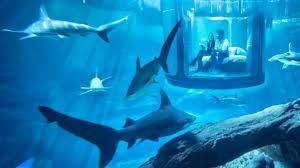 poseidon underwater hotel. Underwater Hotel Room At Night. Pemba Island Price Map The Maldives Hilton™ Poseidon
