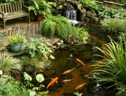 how to care for your pond fish premiere aquascapes coy fish pond care