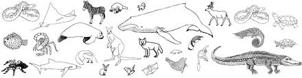 Small Picture U555u Images Desert Animals Coloring Pages Coloring Coloring Pages