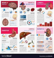 Human Organ Chart Internal Human Organ Health And Medical Chart