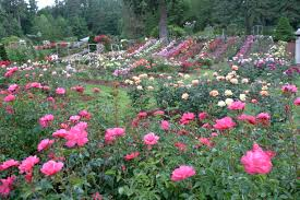 rose trial grounds