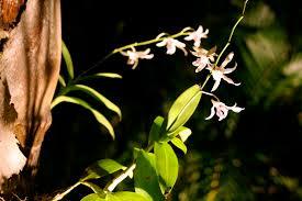 amazing garden lighting flower. increase nighttime beauty with wilmington garden lights amazing lighting flower l