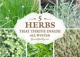 grow herbs indoors 5 herbs that thrive