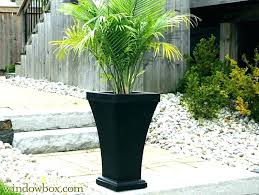 patio palm tree potted palm trees outdoors patio patio planters ideas tall outdoor co with planter