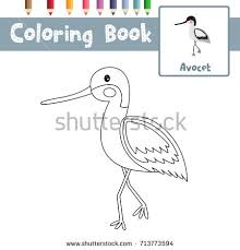 Small Picture Avocet Stock Images Royalty Free Images Vectors Shutterstock