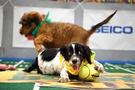 puppy bowl hedgehog cheerleaders. Perfect Bowl Puppy Bowl 2016 Preview A Skunk Referee And Hot Cheerleader Chicks On Hedgehog Cheerleaders