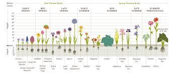 Planting Guides For Plants And Flowers By Bolly Bulbs