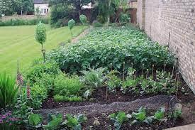 own vegetables vegetable garden planting