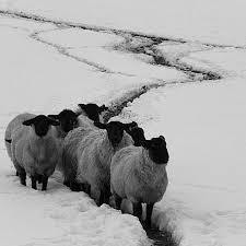 black sheep festival elora centre for the artselora centre for the arts