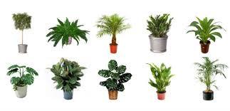 Indoor Plants Featured