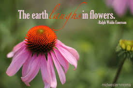 The Beauty Of Flowers Quotes Best of Flower Quotes Images And Pictures