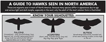 Raptor Id Tools Rockfish Gap Hawk Watch