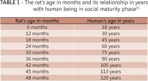 Rats Age Versus Humans Age What Is The Relationship