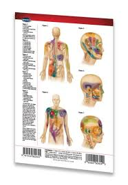 Muscle Pressure Points Chart Details About Trigger Points I Chart Head Torso Acupuncture Pocket Chart Quick Reference