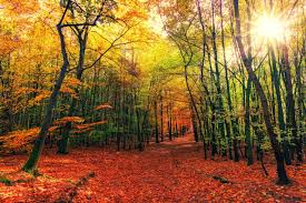 Forest In The Fall Wallpapers ...