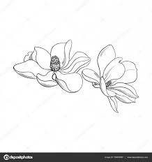 2 つのピンクのモクレンの花スケッチ ベクトル図 ストックベクター