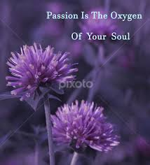 Purple Flower Quotes Passion Soul Quotes Sentences Typography Pixoto