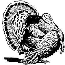 Small Picture 26 best Thanksgiving images on Pinterest Wild turkey Turkey