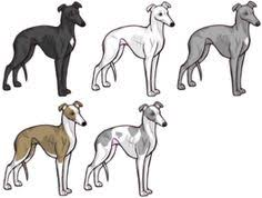 Small Picture Whippet favorite Dog Colouring pages Pinterest Whippets Dog