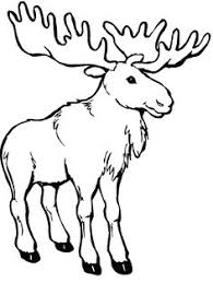 Small Picture Moose coloring page PRESCHOOL Brown Pinterest Moose