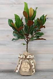 pet sympathy southern magnolia tree with keepsake